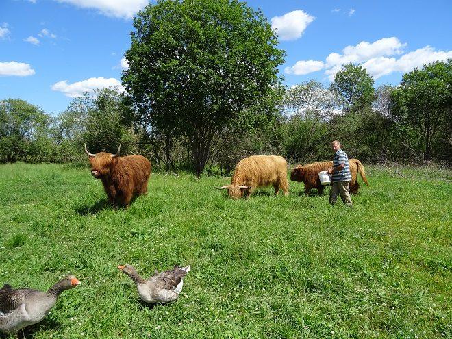 trusu-pilsetinas-govis-1