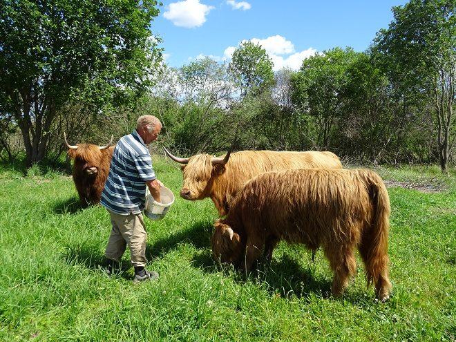 trusu-pilsetinas-govis-2